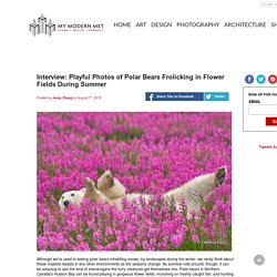 Interview: Playful Photos of Polar Bears Frolicking in Flower Fields During Summer