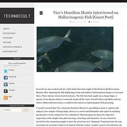 Vice's Hamilton Morris Interviewed on Hallucinogenic Fish [Guest Post]