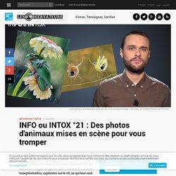 INFO ou INTOX °21 : Des photos d'animaux mises en scène pour vous tromper