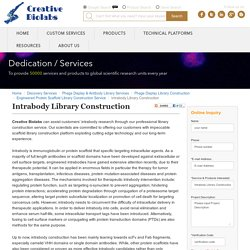 Intrabody Library Construction