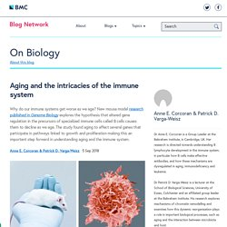 Aging and the intricacies of the immune system
