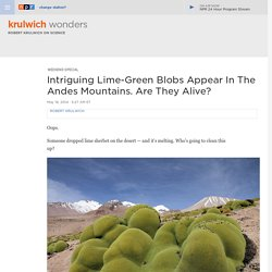 Intriguing Lime-Green Blobs Appear In The Andes Mountains. Are They Alive? : Krulwich Wonders...