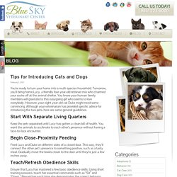 Tips for Introducing Cats and Dogs
