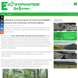 Importance and Protection of Forest Habitat - Environmental Science Studies - Issues, Affects, Causes