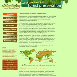 ESchoolToday: Forest Preservation