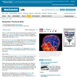Instant Expert: The Human Brain - life - 04 September 2006 - New