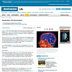 Introduction: The Human Brain - life - 04 September 2006