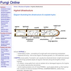 Fungi Online: An Introduction to the Biology of Fungi - Hyphal Ultrastructure