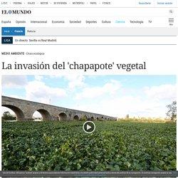 La invasión del 'chapapote' vegetal