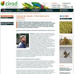 CIRAD 06/02/20 Invasion de criquets : il faut miser sur la prévention