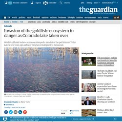 Invasion of the goldfish: ecosystem in danger as Colorado lake taken over