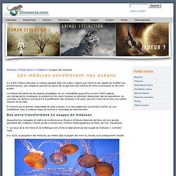 TERRA NOVA - Les méduses envahissent nos océans