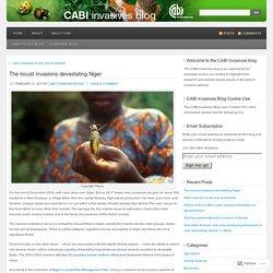 CABIINVASIVES 21/02/17 The locust invasions devastating Niger