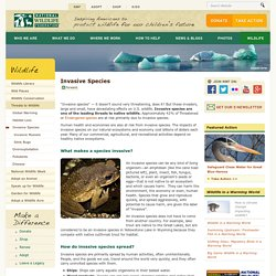 Invasive Species - National Wildlife Federation