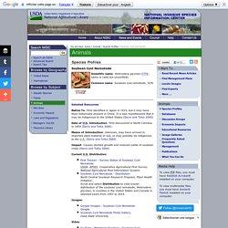 INVASIVESPECIESINFO 28/07/16 Soybean Cyst Nematode
