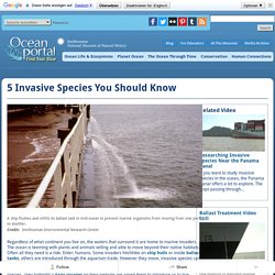 5 Invasive Species You Should Know