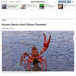 Invasive Species Aren't Always Unwanted