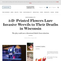 3-D–Printed Flowers Lure Invasive Weevils to Their Deaths in Wisconsin