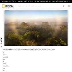 El primer estudio de los gases de efecto invernadero de la selva amazónica sugiere que está empeorando el cambio climático