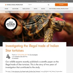 Investigating the illegal trade of Indian Star tortoises