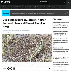 Bee deaths spark investigation after traces of chemical Fipronil found in hives