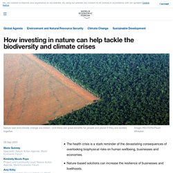 How investing in nature can help tackle the biodiversity and climate crises
