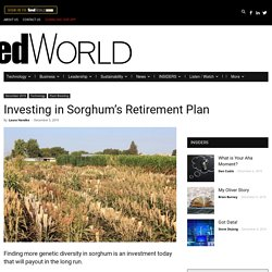 Investing in Sorghum's Retirement Plan - Seed World