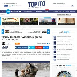Top 38 des chats invisibles, le grand n'importe quoi