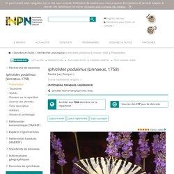 Iphiclides podalirius (Linnaeus, 1758) - Flambé (Le) - Présentation