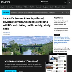 Ipswich's Bremer River is polluted, oxygen starved and capable of killing wildlife and risking public safety, study finds