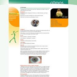 L'iridologie - naturopathie massage thérapie naturelle santé esthétique