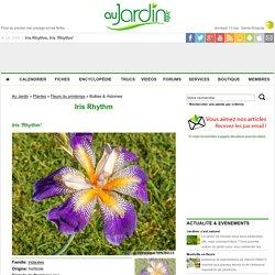 Iris Rhythm, Iris 'Rhythm' : conseils de culture