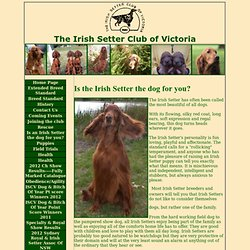 Irish Setter Club of Victoria