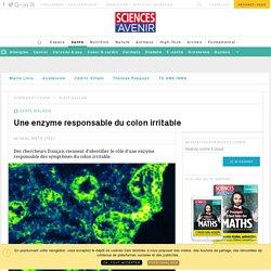 une piste pour traiter le colon irritable - Sciencesetavenir.fr
