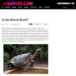 Is the Butch Back? - AfterEllen