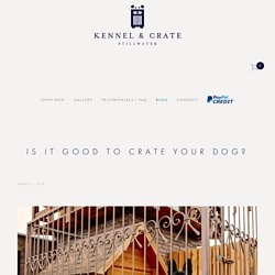 Is It Good to Crate Your Dog? — Kennel & Crate
