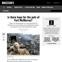 Is there hope for the pets of Fort McMurray?