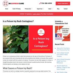 Is a Poision Ivy Rash Contagious?
