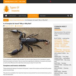 Is A Scorpion An Insect? Why or Why Not?