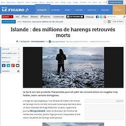 Environnement : Islande : des millions de harengs retrouvés morts