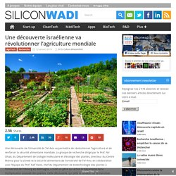 Une découverte israélienne va révolutionner l'agriculture mondiale