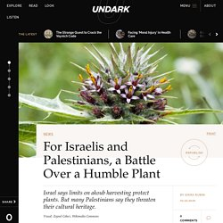 For Israelis and Palestinians, a Battle Over a Humble Plant