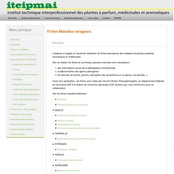 ITEIPMAI - Fiches Maladies ravageurs