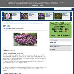 Flore de l'île de la Réunion