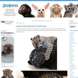 Jaguar Cub: Jordan Zoo's Newest Joy