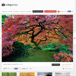 japanese garden in portland photo