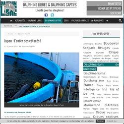 Japon : l'enfer des cétacés !