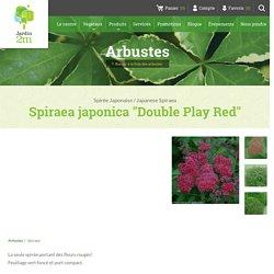 """Spiraea japonica """"Double Play Red"""" - Spirée Japonaise / Japanese Spiraea - Nos végétaux - Jardin2m"""