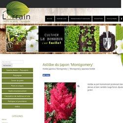 Astilbe japonica 'Montgomery' – Paysagiste – Jardin Lorrain