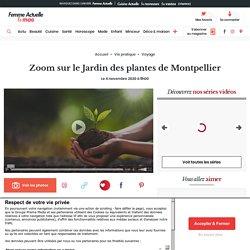 Zoom sur le Jardin des plantes de Montpellier